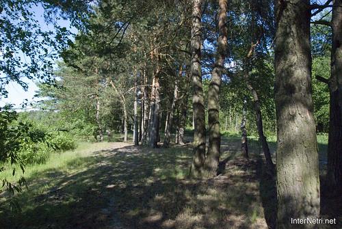 Шацький Національний Природний Парк Озеро Пісочне Сосни InterNetri  Ukraine 350