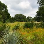 Lady Bird Johnson Wildflower Center 3 thumbnail