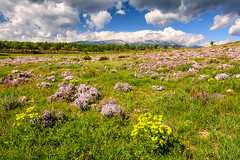 Vista del Moncayo en primavera (mixtli1965) Tags: flores cielo paisaje primavera moncayo nieve montaña zaragoza españa spain landscape nubes flor nikon d7100