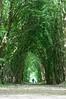 Et ils entrèrent dans la lumière ! (Mike Y. Gyver ( OFF a few days !!! )) Tags: light nature belgium belgique brussels bruxelles forest tunnel tree trees contrast d90 dof dephtoffield mygphotographiewixsitecommyg2017 myg 2018