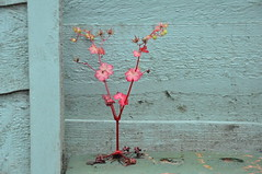 Weed coming out of brick (devonpaul) Tags: weed devon elegant red leaves blue green fence brick littleweed cranesbill shining shiningcranesbill geranium family hairless garden 400 budleigh salterton pretty beautiful wild hole root nice redstem