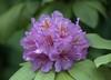 Pretty Flower (Scott 97006) Tags: flower beauty plant petals pretty nature stamens