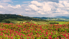 Val d'Orcia-002 (bonacherajf) Tags: italia italie valdorcia toscane tuscany fleurs flowers