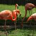 Zoo Sete Rios