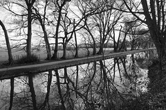 Tree's a Crowd (JamieHaugh) Tags: rufford liverpool england uk gb great britain sony a6000 outdoors walk serenity canal water trees grass peaceful quiet calm reflections nature lancashire leeds sky black white monochrome bw ilce6000 zeiss blackwhite blackandwhite