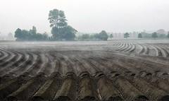de aarde dampt (roberke) Tags: landscape landschap aarde mist nevel trees bomen outdoor buiten veld lijnen lines