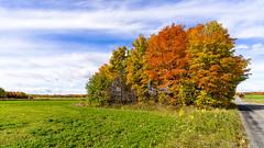 ile 2018-95 (Tasmanian58) Tags: autumn colors zeiss batis batis2818 sony a7ii landscape quebec canada orleansislandorleansislandmitan road