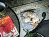 Getting Cozy With The Catcher (PEEJ0E) Tags: mug coffee salinger rye catcher cushion table café chair rescue mutt dog maltese rusty