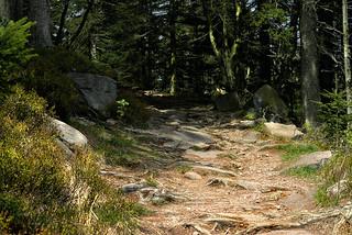 Steiniger Weg auf die Hornisgrinde