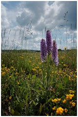 Three Orchids (Pauls Pixels) Tags: allcontent