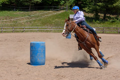 JBC_6289.jpg (Jim Babbage) Tags: krahc bethany appaloosa horses horseshow 2018