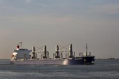 UNI BLOSSOM (angelo vlassenrood) Tags: ship vessel nederland netherlands photo shoot shot photoshot picture westerschelde boot schip canon angelo walsoorden cargo uniblossom bulker