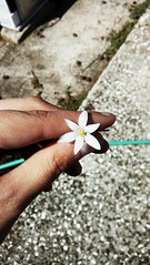 💮 (__jo_) Tags: flowers flower hand white beauty nature summer spring photo life simple