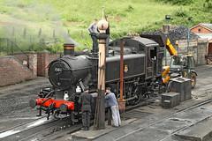 1501 GWR 1600 Class Hawksworth Pannier (Roger Wasley) Tags: 1501 gwr 1600 class hawksworth pannier tank engine svr bridgnorth steam locomotive heritage severnvalleyrailway trains railways