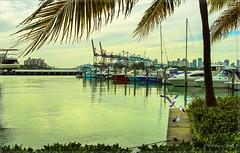 A quiet afternoon at South Point Marina. (Aglez the city guy ☺) Tags: afternoon marina yacht seashore seagull coconuttree sea sailboat miamifl miamibeach urbanexploration waterways walking walkingaround outdoors