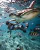 🌍Belize |  Justin David (adventurouslife4us) Tags: turtle adventure wanderlust travel explore summer sea beach nature photography underwater belize