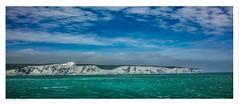 Out on the English Channel this morning. (Richard Murrin Art) Tags: english channel sea seabird richard murrin art