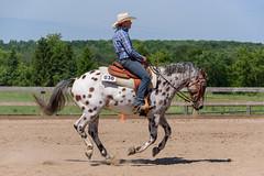 JBC_6084.jpg (Jim Babbage) Tags: krahc bethany appaloosa horses horseshow 2018