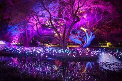 Oasis || ROYAL BOTANICAL GARDENS || VIVID 2018 (rhyspope) Tags: australia aussie nsw new south wales newsouthwales canon 5d mkii rhys pope rhyspope vivid vividsydney sydney royal botanical gardens lights night festival forgotten oasis fireflies flowers