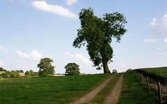Magic tree (Jim Davies) Tags: 35mm film filmfilmforever 35mmfilm canon eos 500 slr colourfilm veebotique kodak portra 160asa oxon northants a422 tree car canonsashby