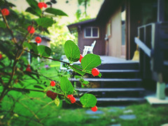My Home (michaeldantesalazar) Tags: home cabin summer nature berries green red manitoba cozy bush tree stairs deck fruit forest yard