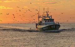 retour au port (christian.man12) Tags: bâteau pêche retour coucher soleil ciel oiseaux port