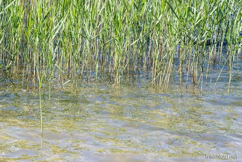 Шацький Національний Природний Парк Озеро Пісочне Прозора вода InterNetri  Ukraine 261