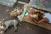 Pray (SaumalyaGhosh.com) Tags: prayer religious religiouspractices india bodhgaya color monk dogs light floor street streetphotography travel
