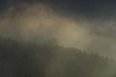 Douceur des brumes (Samuel Raison) Tags: hautsplateauxduvercors vercors brumes brume brouillard montagne mountain paysage landscape nature lumière ombre light shadow shadows rayons rays forêt crête nikon nikond800 nikon4200400mmafsgvr scenery mist misty