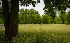 Illinois Tall Grass Prairie 151 of 365 (Year 5) (bleedenm) Tags: animals barns farm outdoors prairie schaumburg volkeningheritagefarm spring2018