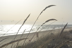 Las Dunas de Rota. Rota (Cádiz) (angelaquiros) Tags: atardecer sunset cádiz rota dunas arena sand nubes village turismo vegetación geografíafísica relieve orografía erosión tourism physicalgeography relief orography erosion vegetation hidrología oleaje hydrology surf océanoatlántico atlanticocean