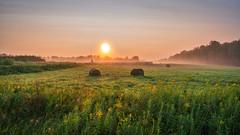 (Clint Everett) Tags: rural country hay bale fog mist sunrise dew drops grass field nature summer landscape minnesota farm