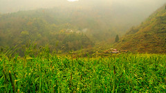 We'll forget the sun in his jealous sky as we lie in fields of gold (sakthi vinodhini) Tags: himalayas backpacking teahouse farm greenery lush fields smoke mountains hills stepped corn abc annapurna sanctuary hdr ngc