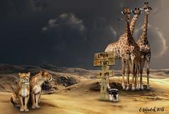 Lyun Fud (clabudak) Tags: lion food giraffe