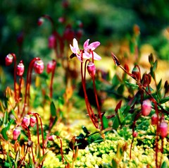 It's a Small World (barbara_donders) Tags: natuur nature spring lente macro micro bokeh organisms flowers bloemen mos moss landschap landscape beautiful magical mooi prachtig pink roze