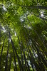 Bamboo forest in the Ian Potter Childrens Garden, Royal Botanic Gardens, Melbourne - D7000 (avlxyz) Tags: royalbotanicgardens melbourne victoria australia park fb5