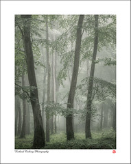 Trio (Chalky666) Tags: tree trees wood woodland forest fog mist southdowns westsussex painterly landscape art