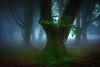 Urruska (arbioi) Tags: baztan bosque canon eos40d euskalherria frio argibel harrikulunka kintoreal navarra nafarroa naturaleza niebla quintoreal urkiaga urepel alduides bearzun beartzun elizondo zarkindegi belaun