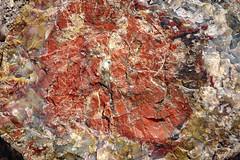 Petrified Wood (dorameulman) Tags: dorameulman petrifiedwood petrifiedforest wood macro details canon7dmark11 texture