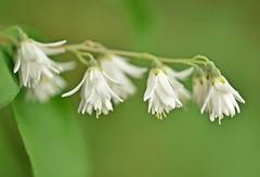 LBG June 18 - 55 (Lostash) Tags: nature life plants flowers leaves flora gardens leicesterbotanicalgardens