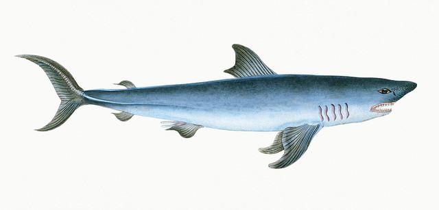「鯖を読む」の例文10選|類義語4つと読み方や意味
