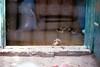 The pretty duckling (CristinaDiaconu23) Tags: analog analogue film 35mm minolta fujifilm fuji duckling animal bird countryside home 7dwf duck outside fly rural flickr romania