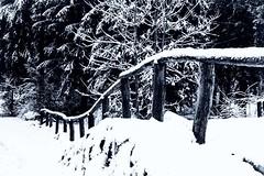 Staccionata (u.giommetti) Tags: biancoenero blackandwhite natura nature paesaggio landscape alberi trees inverno winter neve snow staccionata fence borno valcamonica lombardia italia italy europa europe