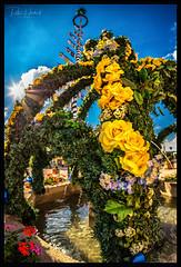 flower fountain 2 (P.Höcherl) Tags: nikon d800 naiad lomography neptuneconvertibleartlenssystem neptuneartlens neustadt bayern oberpfalz deutschland germany bavaria upperpalatinate 15mm wide uww weitwinkel rosen gelb yellow rose