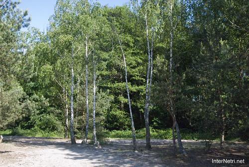 Шацький Національний Природний Парк Озеро Пісочне Берези InterNetri  Ukraine 197