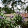 Summer time (MadMouseMan) Tags: analogue medium format pentacon six kodak ektar flowers bokeh vintage lens vintagelens biometar