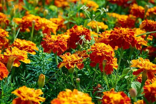 Flower 236 ©  Alexxx Malev