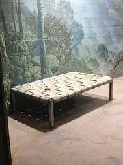 Papa bear's new bed (CSBaltimore) Tags: zoo tian bear panda