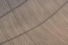 natural texture (luporosso) Tags: nature naturaleza naturalmente nikon nikonitalia nikond500 rossolupo nikinitalia terra heart terraarata geometrie geometry rurale astratto abstract