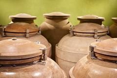 Amphorae (@WineAlchemy1) Tags: amphorae wine fermentation maturation terracotta moresco marche italy castrummorisci pecorino faleriodoc rossopicenodoc sangiovese igt whitewine redwine montepulciano